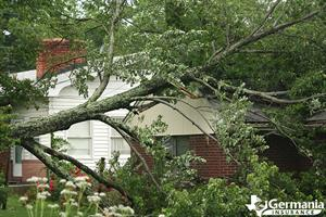 A home damaged by a felled tree