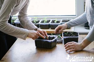 A woman planting an indoor vegetable garden