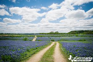 A Texas road lined with bluebonnets